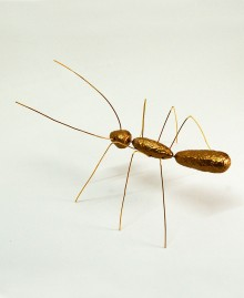 XY MALE ANT, Table / wall ant. Hand painted resin and metal. Color gold. Made in Italy by Antartidee